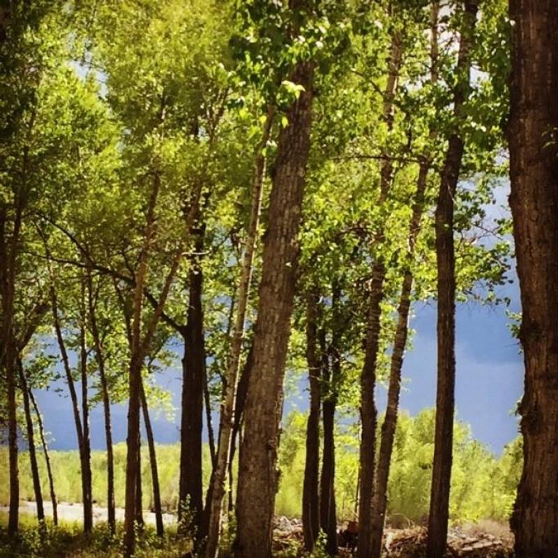 Gallatin River Hideaway: INACTIVE 6