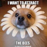 I WANT TO ATTRACTTHE BEES