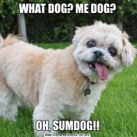 WHAT DOG? ME DOG?OH, SUMDOG!!