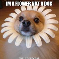 IM A FLOWER NOT A DOG