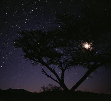 Constellation_Crux