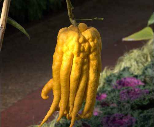 Weird Things to Grow and Market on the Homestead, homesteading