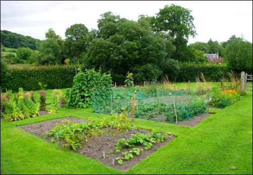 Vegetable Gardening: Your Next Step to Self-Sufficiency