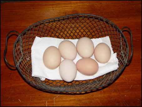 marketing homestead products eggs