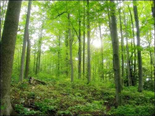 start a woodlot management plan