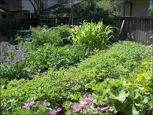 sharecropper, Growing Food in the Inner-city