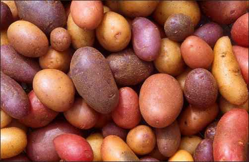 History of Potatoes