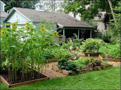 small homestead, small-scale homesteading