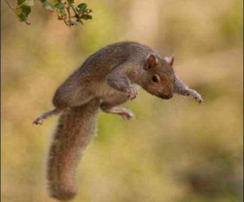 Mad Squirrel Bombing Run homesteading