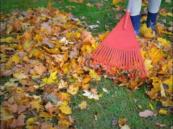 Fall Chores on the Homestead: