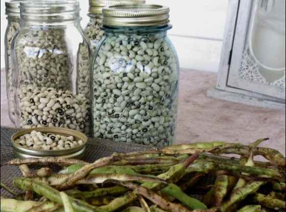 Food Insecurity in America, black eyed peas in blue mason jar