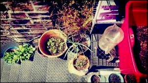Container Gardening in the City, Urban Homesteading on a Budget, Fire Escape Gardening