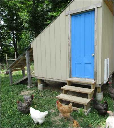 Raising Chickens for Eggs need a coop