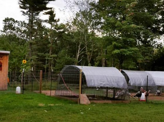 Multi-purpose chicken tractor, homesteading