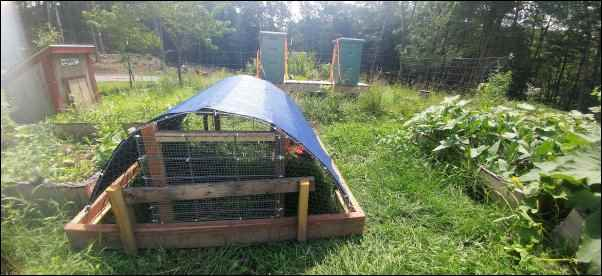 Multi-purpose chicken tractor