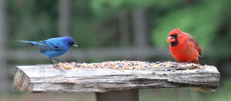 Backyard bird feeding, homesteading