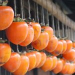 Growing Persimmons From Seed homesteading