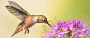 Becoming a Certified Wildlife Habitat, homesteading, homestead, creating Wildlife Habitat