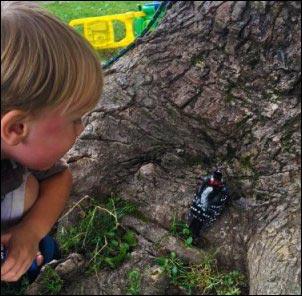 kid looking at woodpecker, Becoming a Certified Wildlife Habitat, homesteading, homestead, creating Wildlife Habitat
