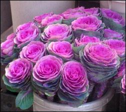 ornamental-cabbage, flower market, Make MoneyWithSpecialty Herbs and Cut Flowers, make money with specialty herbs, cut and come again flowers, make money with herbs, start an herb business successful cut flower business, homesteading, homestead