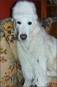 chiengora-hat-and-scarf, homesteading-with-dog