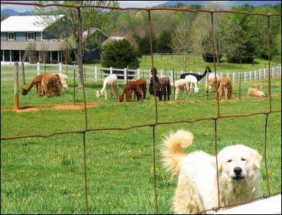Fiber Fairs, selling fiber products, where to sell handmade yarn, Fiber festivals, Selling animal fibers