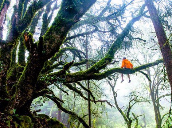 Utilizing-Trees