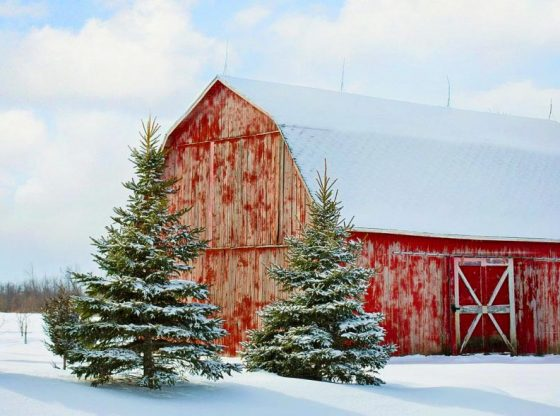 red barn in the snow with pine trees, preparing for the holiday rush, holidays, enjoying the holidays, profitable months for homesteading, winter homesteading