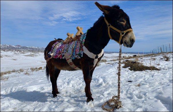 donkey with homemade saddle blanket