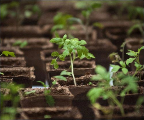 Begin-With-Seeds start-With-Seeds