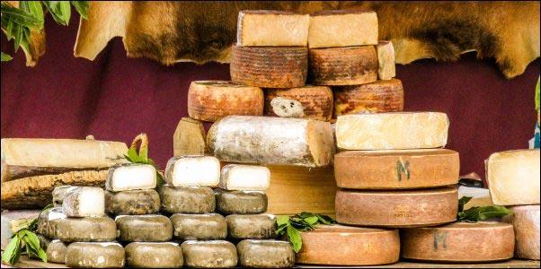 sheep-cheese