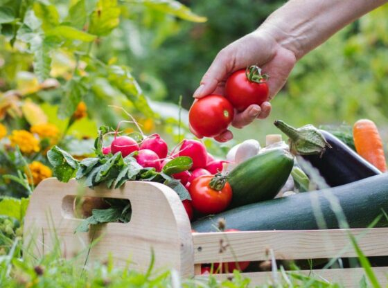 How-to-Live-Off-Your-Garden-All-Year-Round
