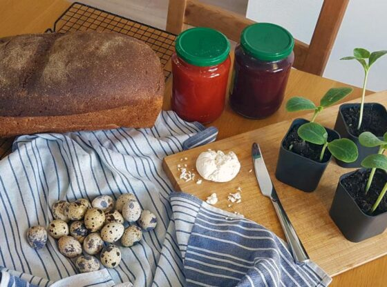 how to start homesteading today how do I prepare for homesteading? best homesteading skills to learn homestead startup costs urban homesteading