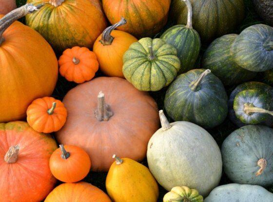 pumpkin recipes, pumpkin desserts, savory pumpkin recipes, pumpkin puree, pumpkin soup, herbs for pumpkin