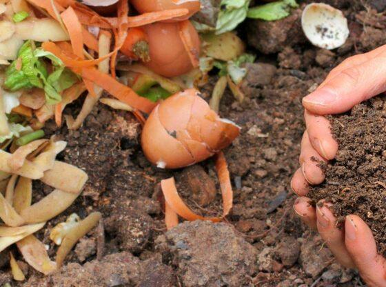 Basics of Composting