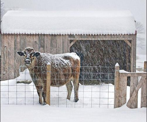 preparing animals for winter