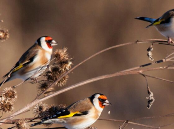 Homesteading, Seed Heads, Winter Landscape, Landscaping, Wildflowers, Wildlife