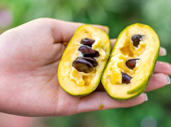The Pawpaw: America's Secret Native Fruit