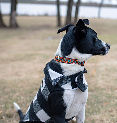 Pearl Wearing Upcountry Collar