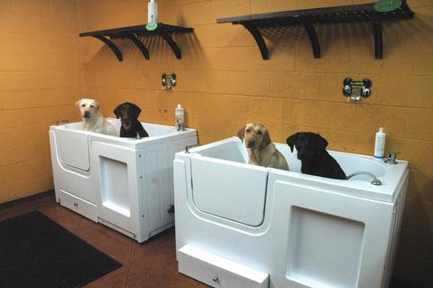 Grooming and dog wash hollywood feed self serve dog wash solutioingenieria Images