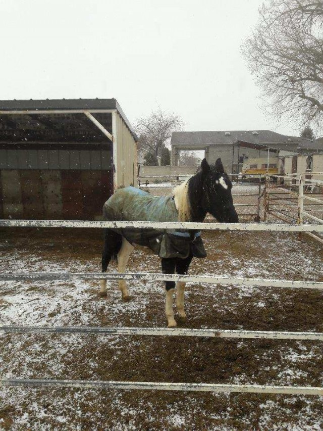 18 month old filly