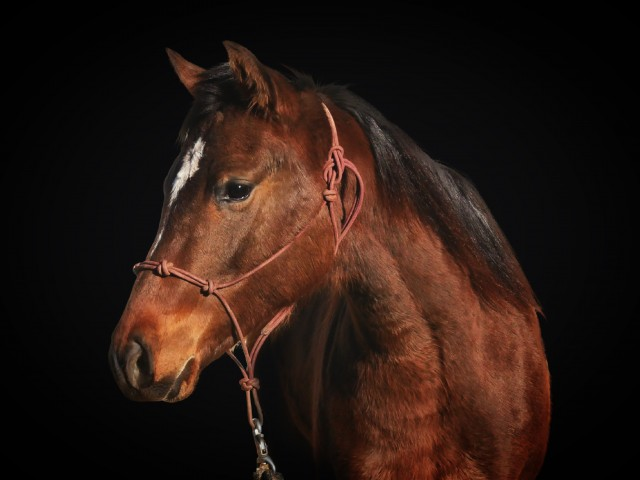 2 Year Old AQHA Filly