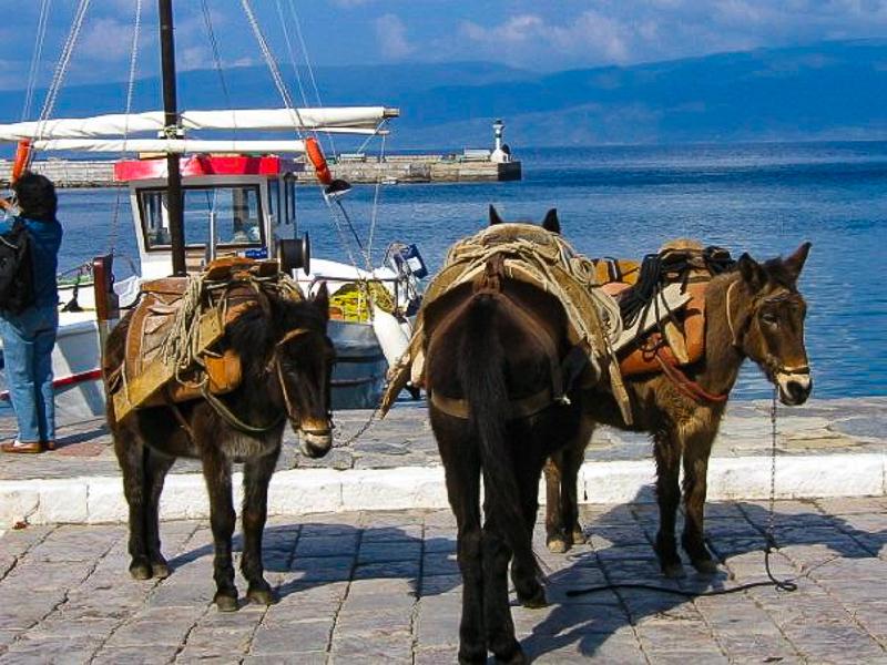 three donkies on a Greek island