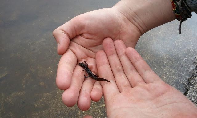child's hands holding a lizard