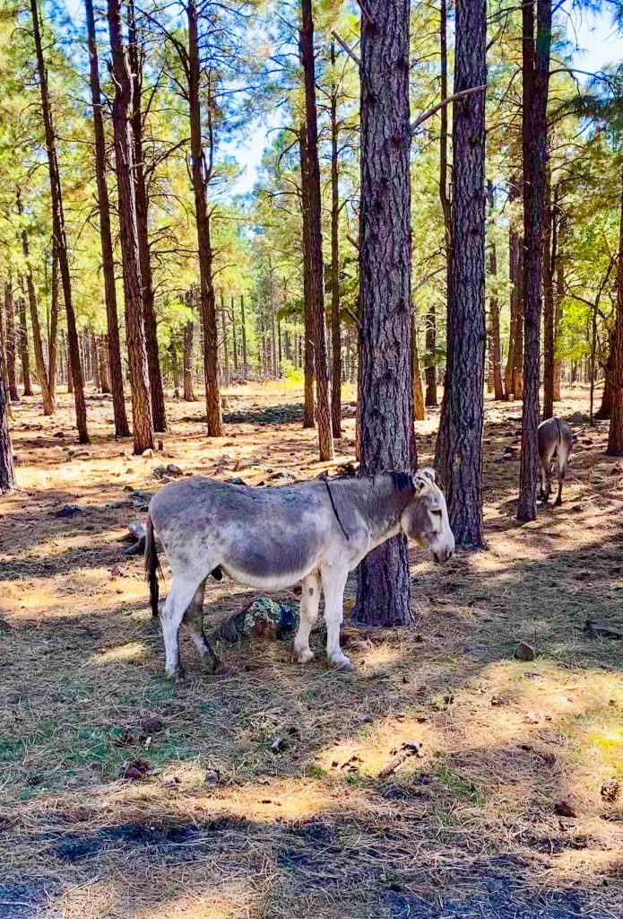 donkey in a forest