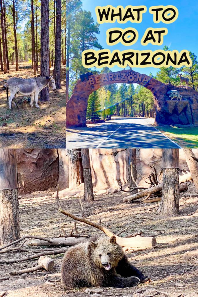 Bearizona collage