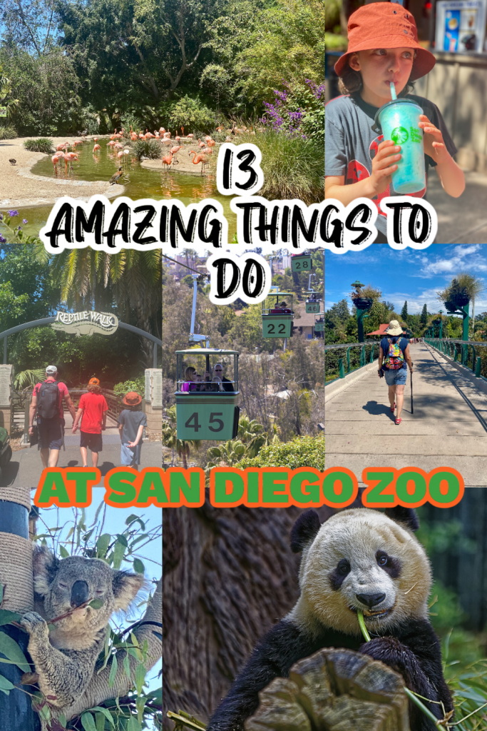 Top Fun Things to do at San Diego Zoo