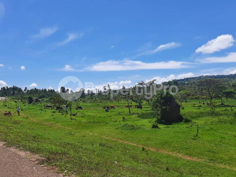 Land for sale Buikwe Nyenga Buikwe Central - 4