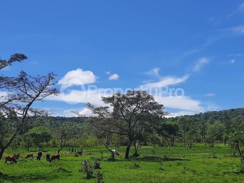 Land for sale Buikwe Nyenga Buikwe Central - 1