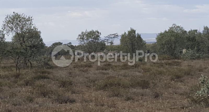 Land for sale Naivasha, Naivasha Naivasha Naivasha - 3